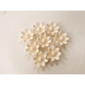 Põldlill 8tk valge