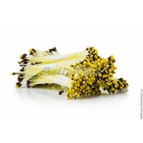 Kollased tolmukad tumepruuni otsaga,5x25tk, Bella Rosa