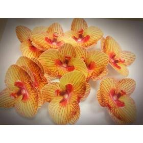 Vahvlilill - kirju orhidee, 5tk