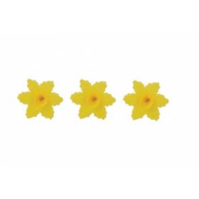 Kollane nartsiss - vahvlilill, 10tk