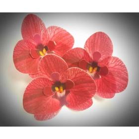 Vahvlilill - bordoovärvi orhidee, 5tk