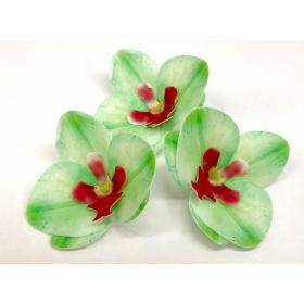 Vahvlilill - roheline orhidee, 5tk